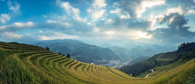 Agriculture, Green, Rice, Asia, uttarakhand, Rose Farming in Hindi