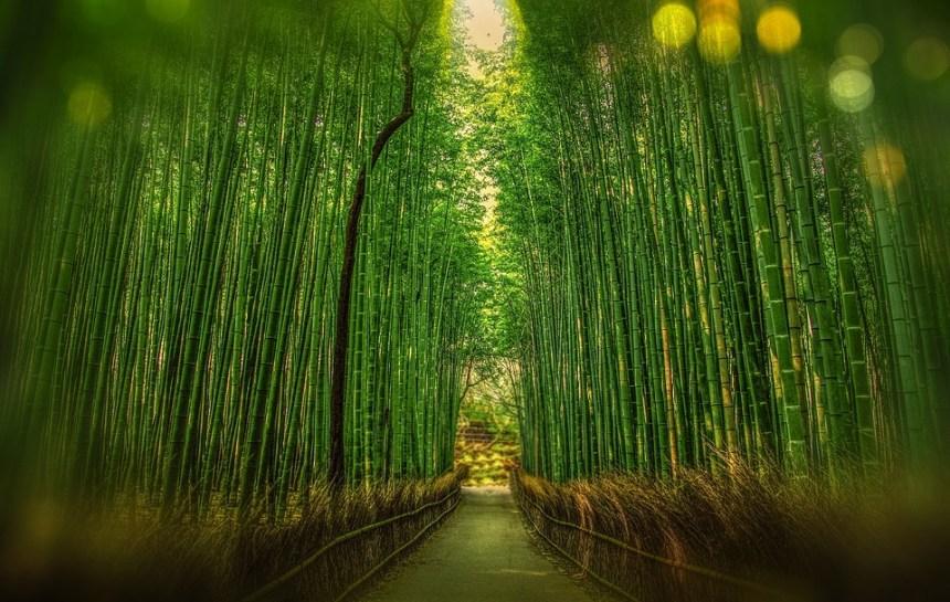 Kyoto, Giappone, Bambù, Bokeh, Avventura, Foresta