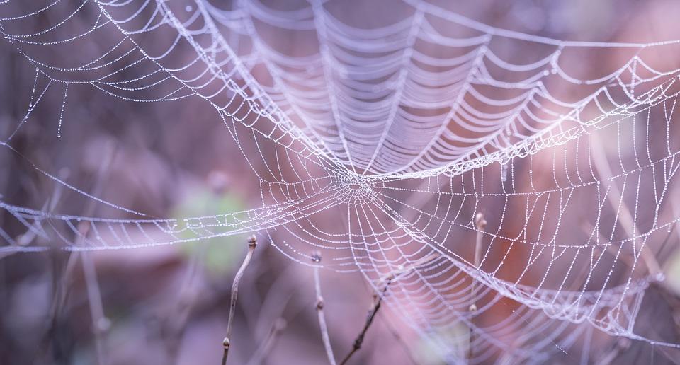 クモの巣, クローズ アップ, マクロ, クモ, トラップ, Web