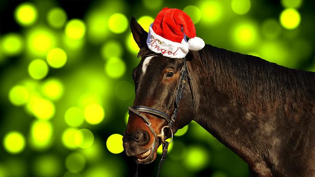 Free Photo Horse Christmas Santa Hat Funny Free