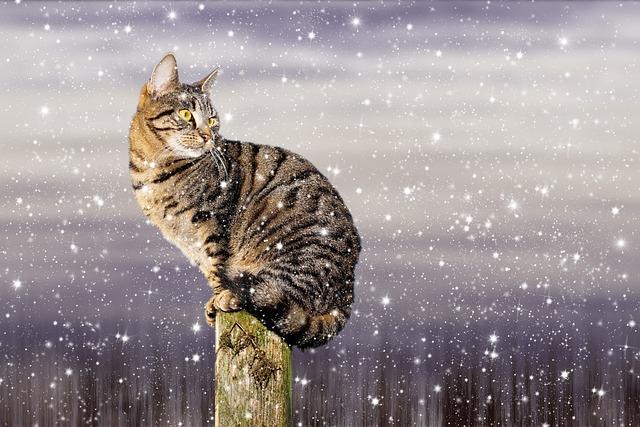 Kostenloses Foto Katze Schnee Winter Hauskatze