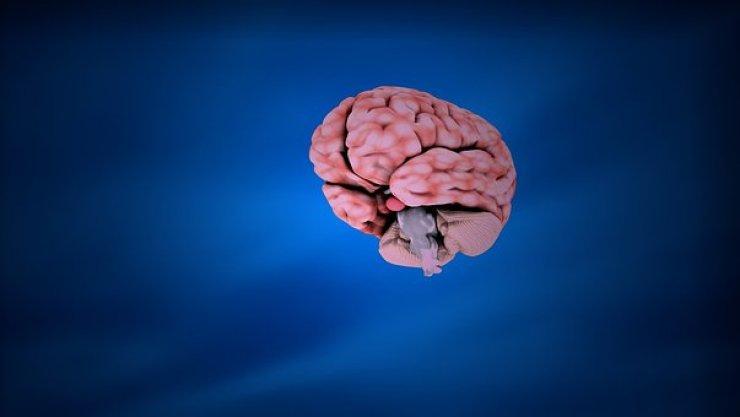Education, Brain, Anatomy, Human