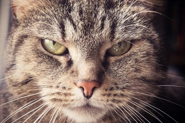 猫 イライラ 怒る
