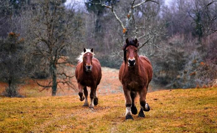 Horses, Animals, Nature, Horse, Equine, Mane, Farm