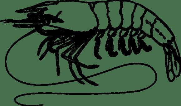 Hewan Crustacea Makanan Gambar Vektor Gratis Di Pixabay