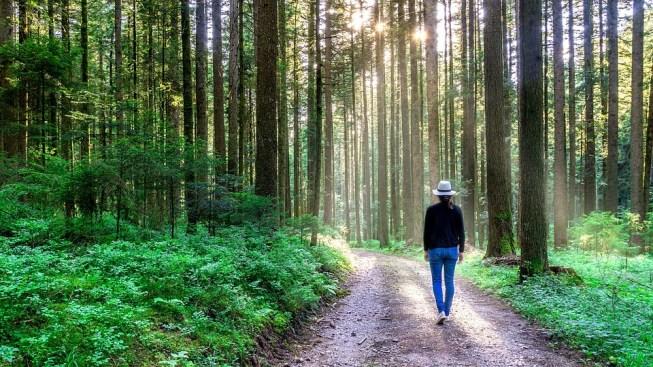 自然, フォレスト, 歩く, 森の小道, サンセット, 女性, 女の子, 帽子, 夏, 休日, 黒い森, 木