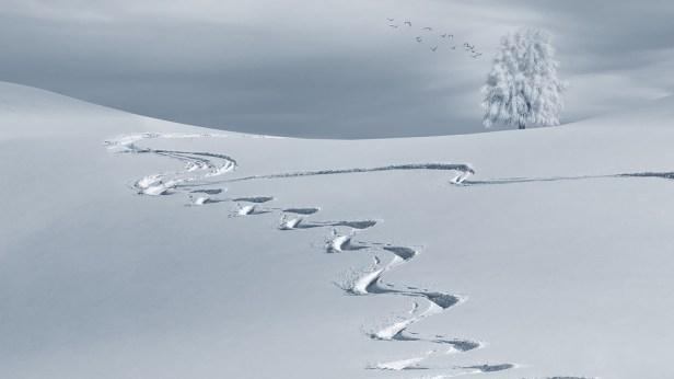 Wintry, Backcountry Skiiing, Ski Tracks