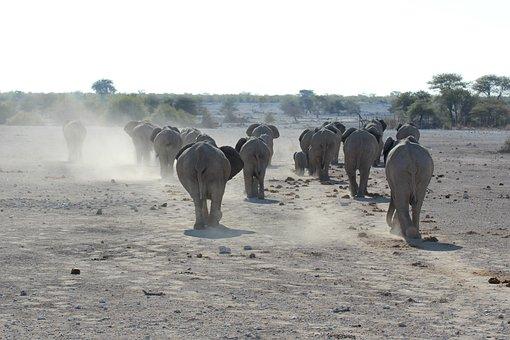 Elephant, Namibia, Etosha National Park
