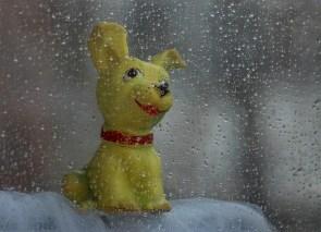 Temps pluvieux, chien heureux !