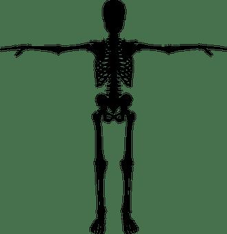 Kerangka Manusia Gambar Vektor Unduh Gambar Gratis Pixabay