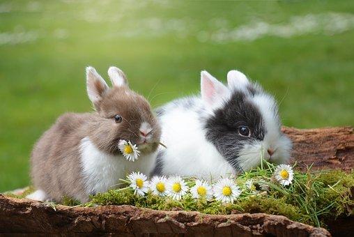 hewan mamalia kelinci