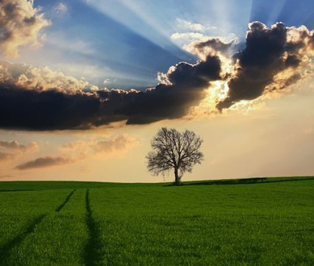 Countryside Tree Landscape Sunlight Nature