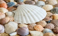 Sea Shells, Shells, Sea, Sea Shell, Ocean, Nature
