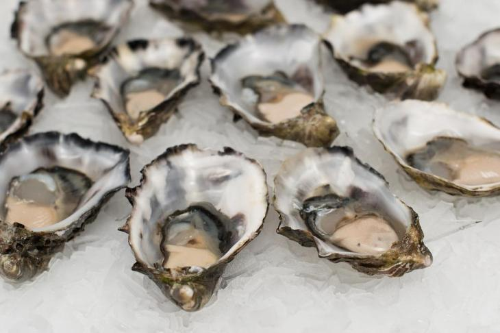 Oysters, Shell Fish, Seafood, Shell, Fish, Food, Fresh