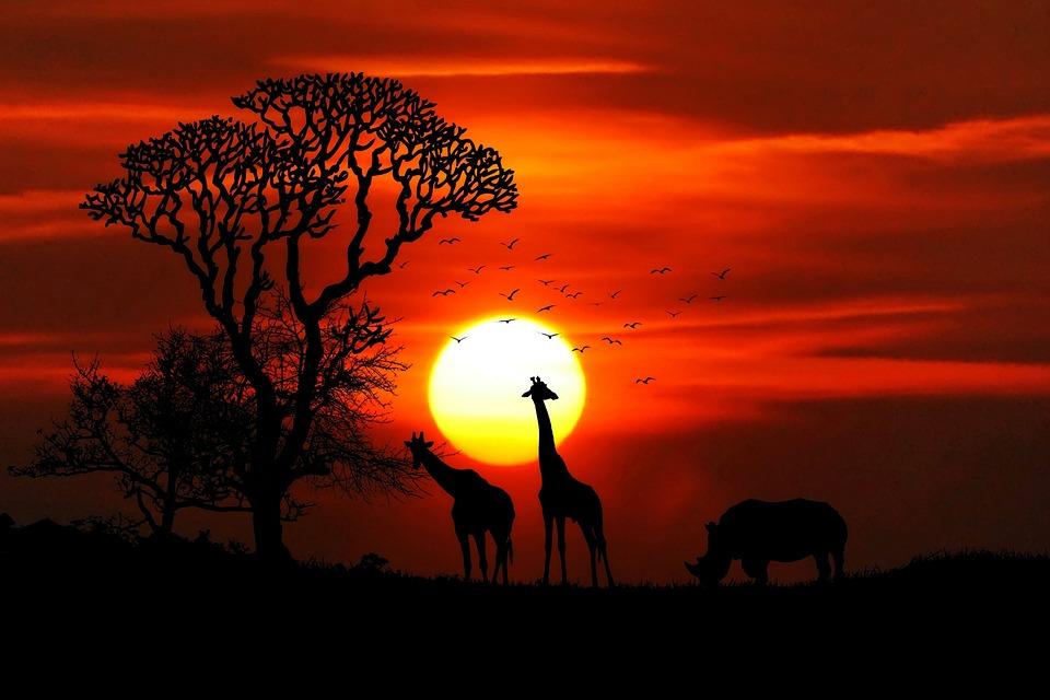 アフリカ, 動物, サファリ, サイ, キリン, ビッグ ・ ゲーム, 荒野, サバンナ, 動物の世界