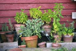 Kruidentuin, Potten, Tuin, Tuinieren, Plantaardige