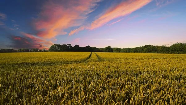 Countryside, Harvest, Agriculture, Farm