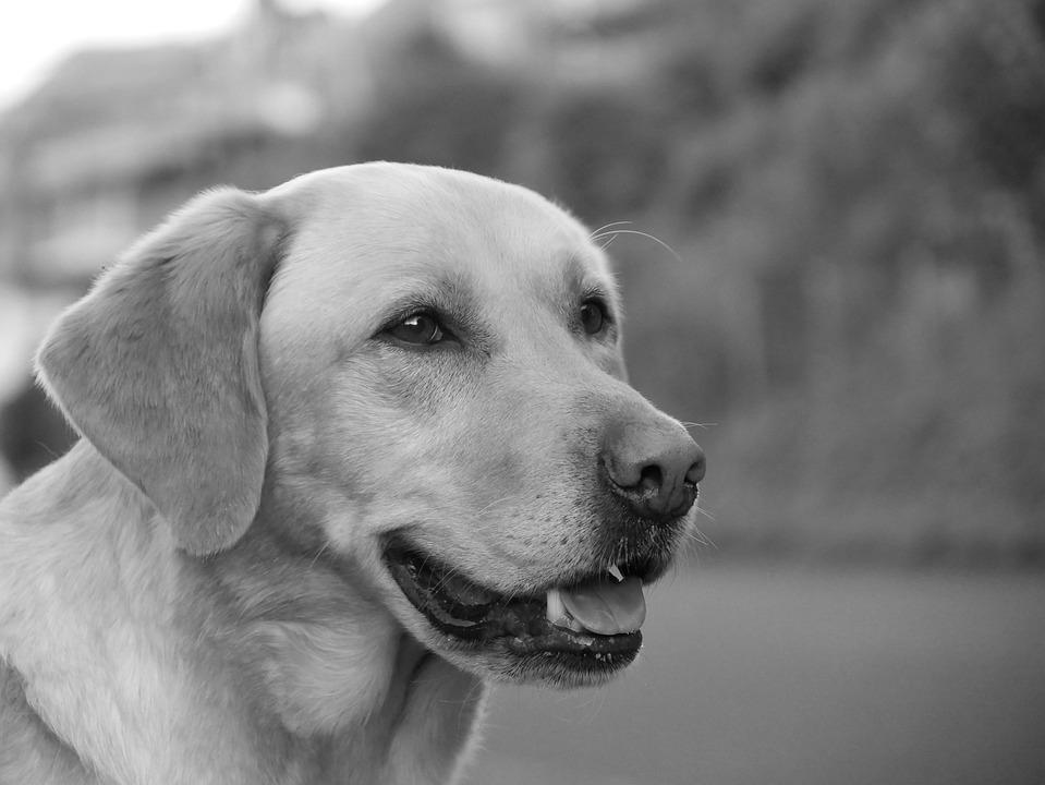 Hund Schnauze Schwarz Weiss Hunde Kostenloses Foto Auf Pixabay