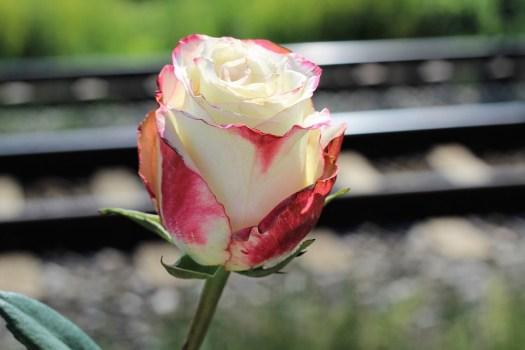 Interrompere Adolescente Suicidio, Bianco Rosso Rosa