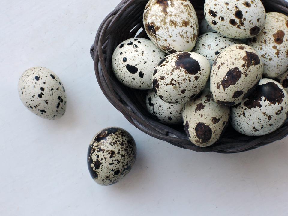 卵, ウズラ, 製品, 食品