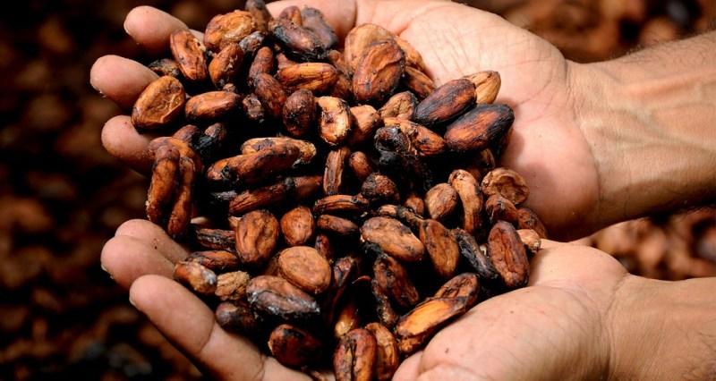 手, ココア, カカオ, おいしい, カカオニブ, カカオ豆, ココアバター, 香り, 保持, ココア豆