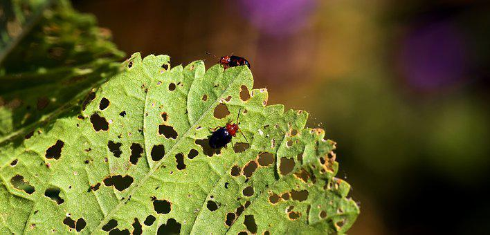 Pests, Leaf, Nature, Insect, Infestation