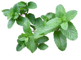 Herb, Mint, Cut, Out