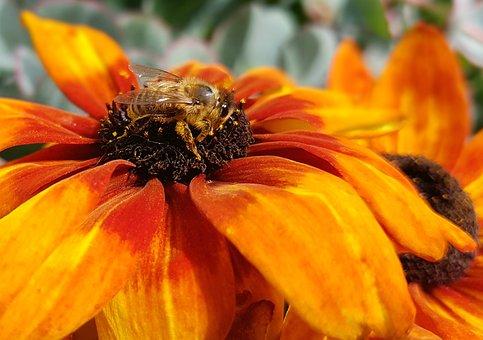 Albină, Insectă, Floare, Polenizare