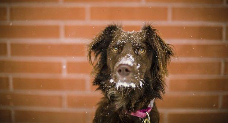 Dog, Animal, Cute, Eyes, Snow, Winter