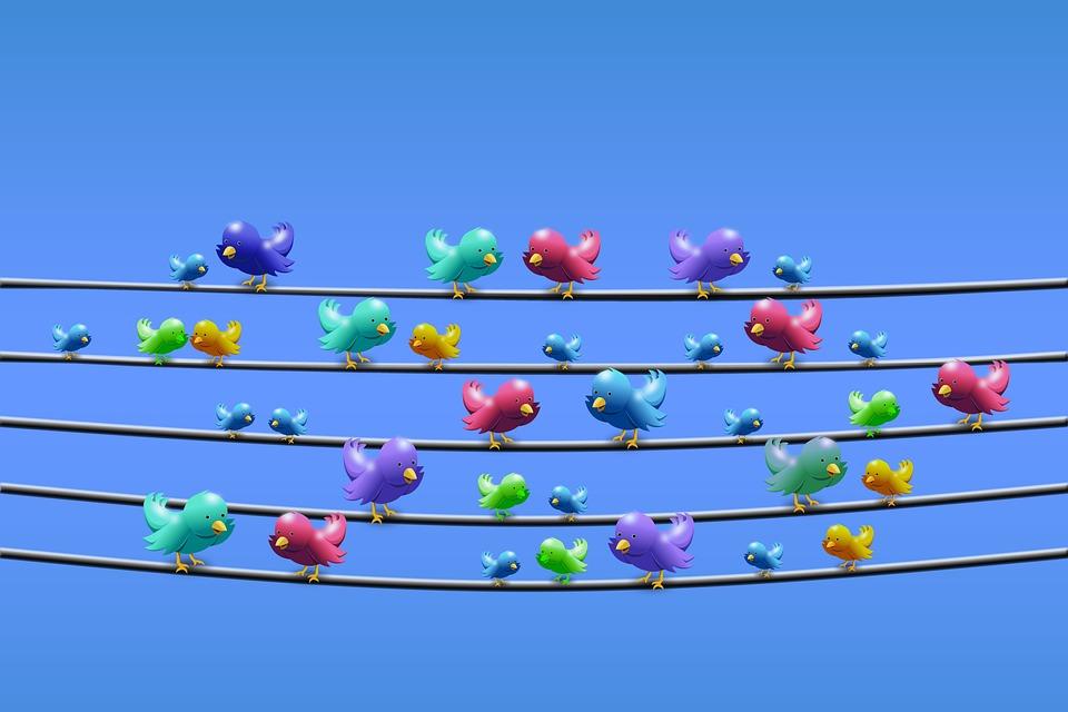 Twitter, Linea, Linea Elettrica, Sedere, Cinguettio