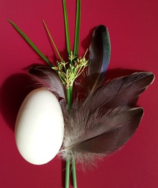 Duck, Egg, Feathers, Pacific Black Duck