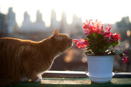 Cat, Cats, Pet, Pets, Flowers And Just