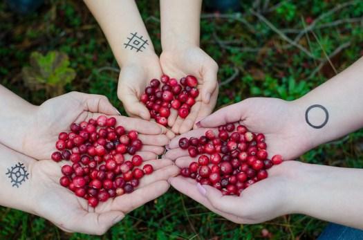 Mirtilli Rossi, Frutti Di Bosco, Palude, Foresta