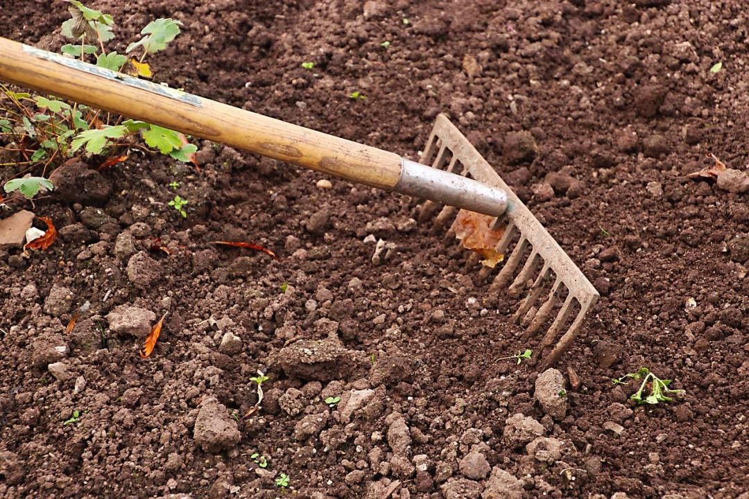 Soprattutto se siete alle prime armi, occuparsi del vostro orto sarà un'ottima occasione per imparare tante cose nuove. Sulla terra, sugli ortaggi, sui concimi, ma anche sui cicli della natura e sull'importanza di piantare in un determinato momento dell'anno