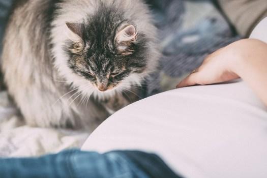 Animali, Persone, Allergia, Bambino, Pancia, Nascita