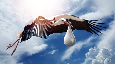 Bird, Natura, Ala, Cielo, Volo, Cicogna, Volante