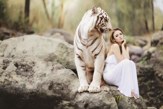 Natura, Mondo Animale, Tigre Di Bengala Bianca, Tigre