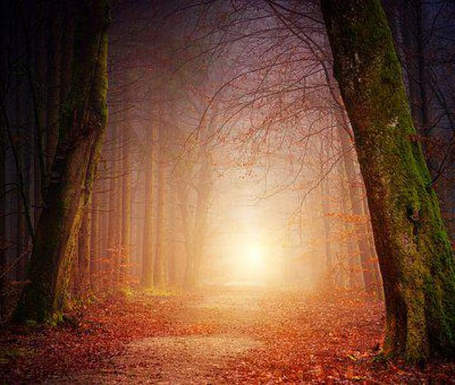 Nature Forest Trees Light Sun Fog