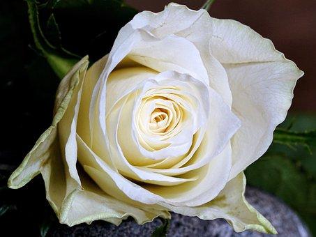 Ont Augmenté De, Fleur, Pétale, Amour