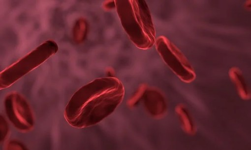 Red Blood Cells, Microbiology, Biology, Chemistry, Nitric Oxide