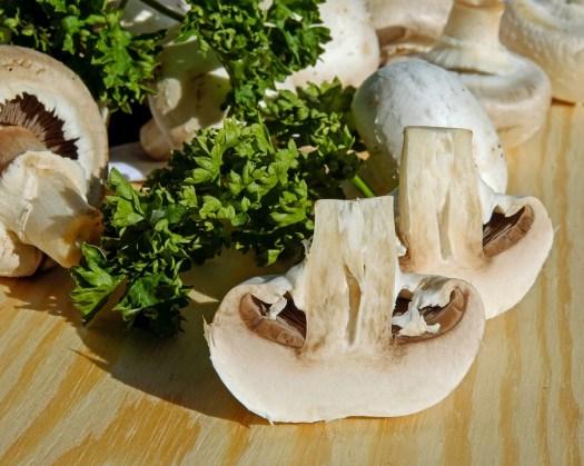 Funghi, Fungo Bianco, Commestibile, Impianto