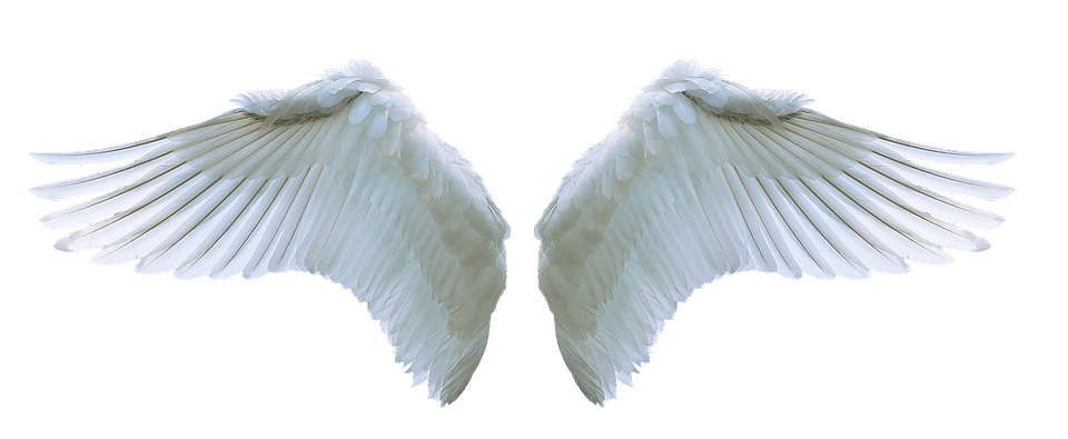 Wing Angel Swan Free Photo On Pixabay
