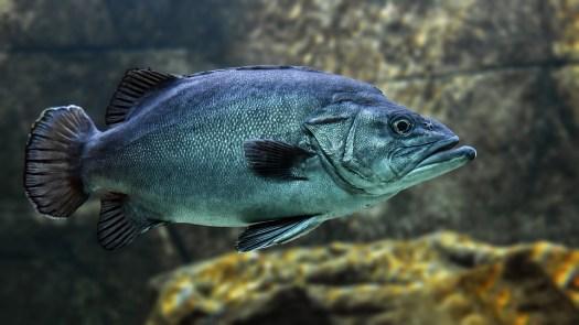 Di Pesce, Nuotare, Acqua, Animale, Subacquea