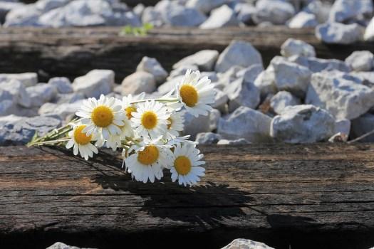 Daisy Bouquet Ferroviaria