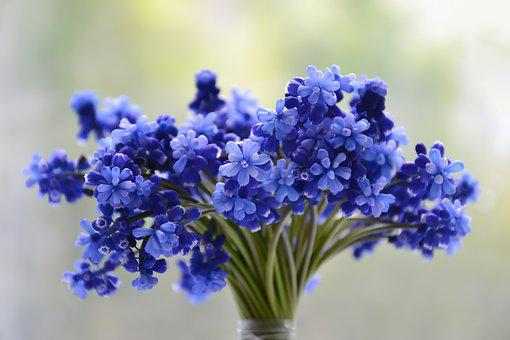 Flowers, Bouquet, Blue, Muscari, Bloom