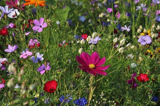 Fleurs, Prés, Herbe, Plante, Nature