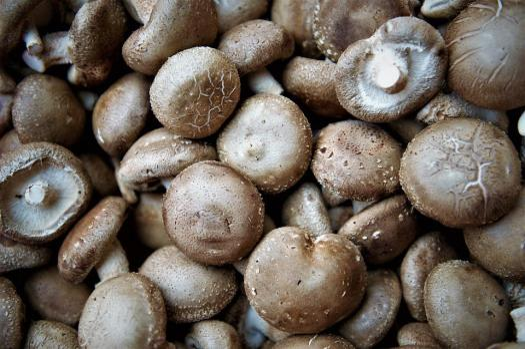 Funghi Commestibili, Funghi Shiitake, Sano