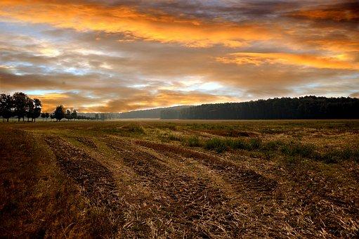 Paysage, Champ, Nature, Ciel Du Soir