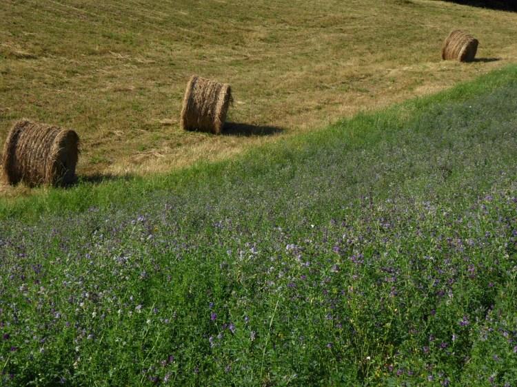 Campaign, Alfalfa, Bale, Forage, Agriculture, Summer