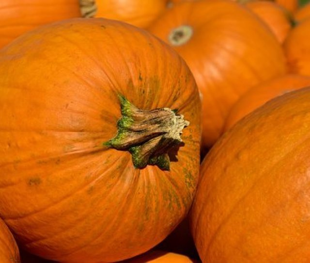 Pumpkin Halloween Autumn October